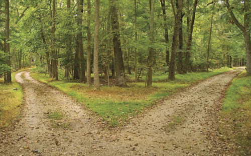 Making the right choices in the road less travelled by robert frost
